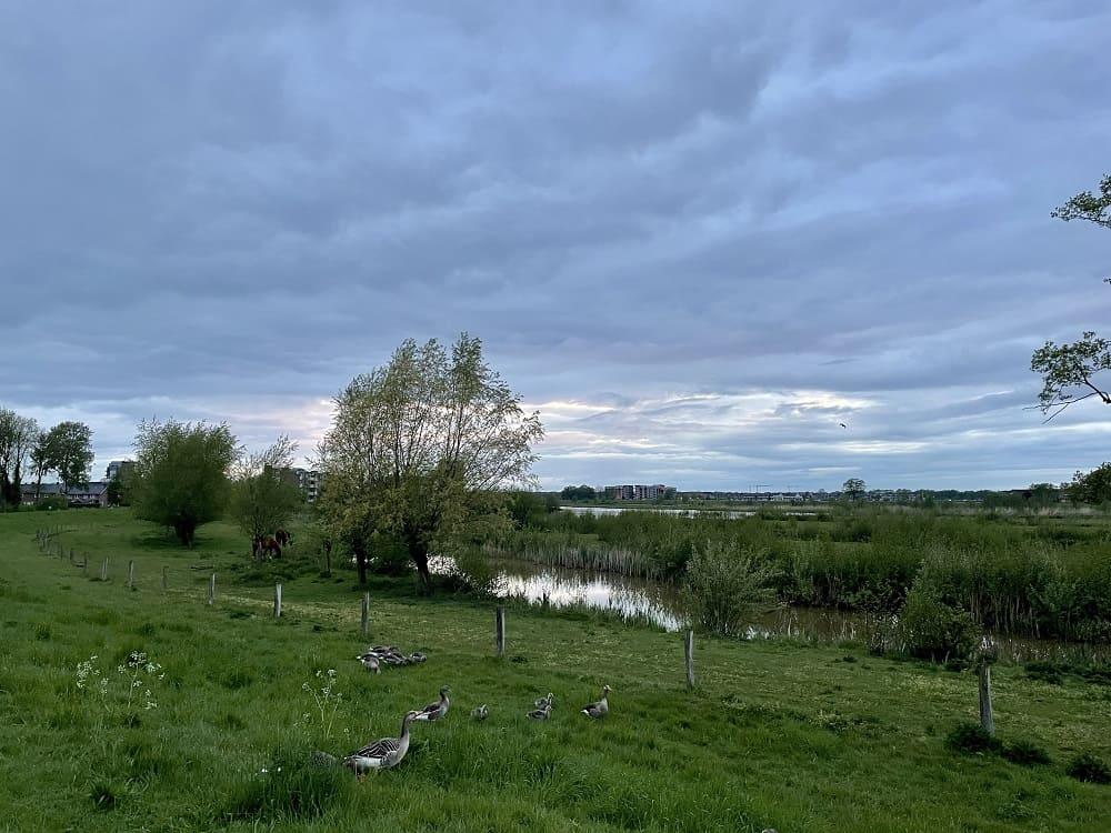 Ganzen bij De Vecht in Hardenberg, een fijne plek vol rust (waar ik zit krijg om te mediteren)